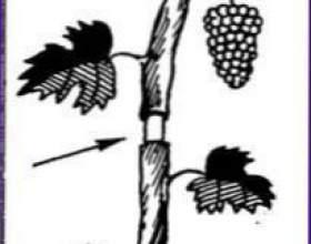 Блинчики со взбитыми сливками и орехами фото