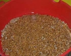 Брага на зерновой основе фото