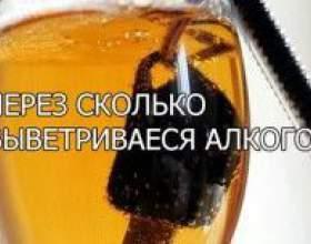Через сколько выводится алкоголь фото