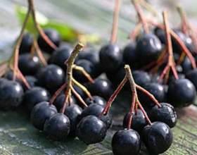 Делаем домашнее вино из черноплодной рябины фото