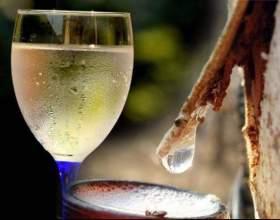Делаем вино из березового сока в домашних условиях фото
