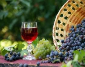 Делаем вино из винограда изабелла фото