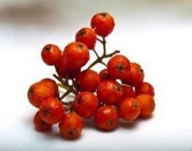 Домашние настойки из ягод рябины красной фото