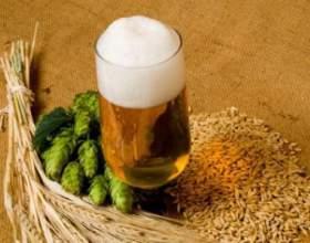 Домашний рецепт светлого пива фото