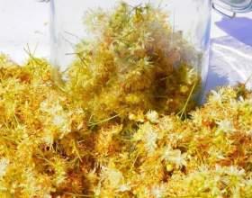 Хоть и липовая, но не «липа»! Полезные и вкусные настойки на липовом цвете фото