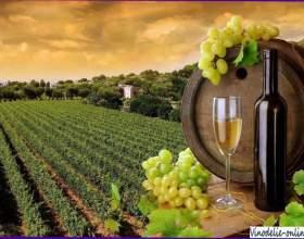 История виноделия во франции фото