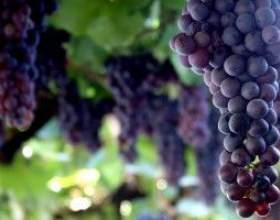 Как поставить вино в домашних условиях фото