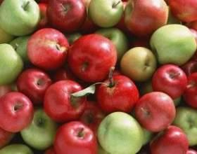Как приготовить брагу на основе яблок? фото