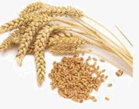 Классический самогон из пшеничной муки фото
