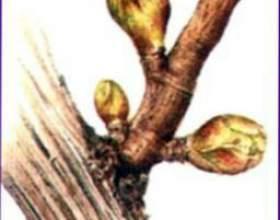 Ветчина с петрушкой фото
