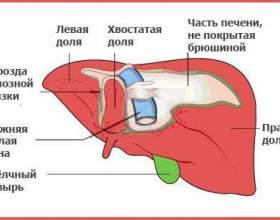 Особенности применения гепатопротекторов и список препаратов фото
