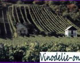 Особенности венгерского вина фото