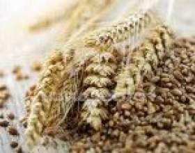 Пшеничная брага без дрожжей фото
