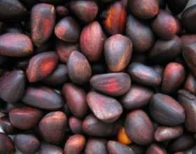 Рецепт кедровой настойки на самогоне. Настойка из кедровых орешков фото
