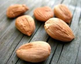 Рецепт настойка из абрикосовых косточек фото