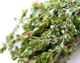 Рецепт приготовления травы чабрец от алкоголизма фото