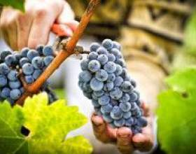 Рецепт приготовления вина фото