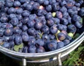 Рецепт вина из голубики в домашних условиях фото