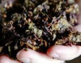 Рецепт виноградной браги фото