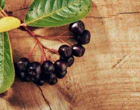 Рецепты настоек на черноплодной рябине. Осеннее настроение фото