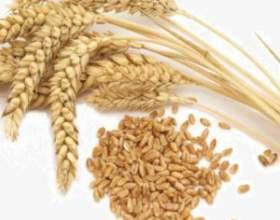 Самогон из пшеницы делаем сами фото
