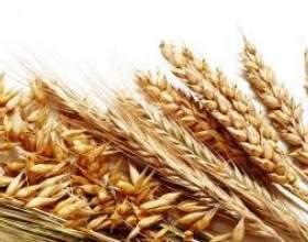 Самогон из пшеницы: рецепт фото