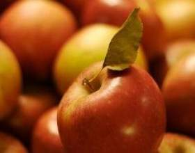 Секреты виноделов: натуральная брага из яблочного сока фото