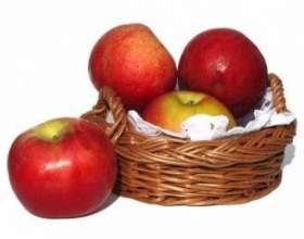 Универсальная брага из яблок фото