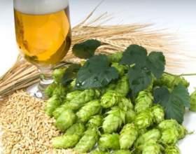 Узнайте рецепт пива из хмеля фото