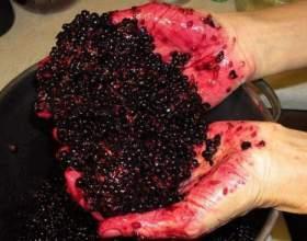В огороде бузина, а в погребе винчик. Готовим бузиновое вино! фото