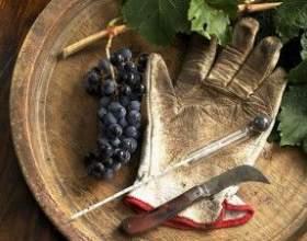 Вино из сорта изабелла своими руками фото