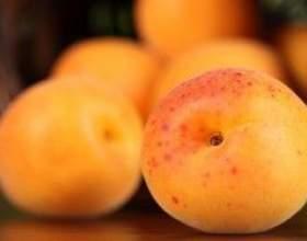 Вино из спелых абрикосов фото