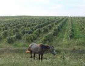 Виноделие болгарии – ч. 2 – ч. 2 фото