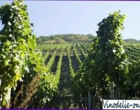 Виноделие в германии фото