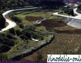 Виноделие в хорватии фото