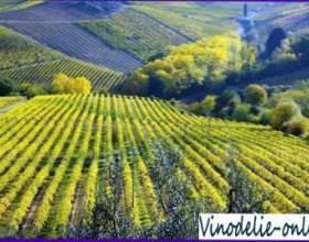 Виноделие в италии фото