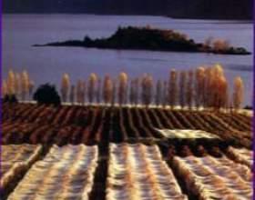 Виноделие в новой зеландии фото