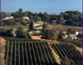 Виноделие в венгрии фото