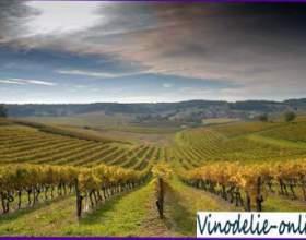 Виноделие во франции фото