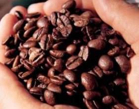 Знакомьтесь – кофе робуста фото
