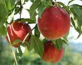 Наливка из персика фото