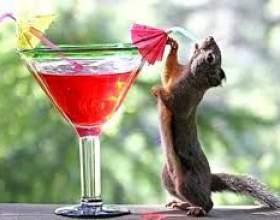 Напитки на день рождения фото
